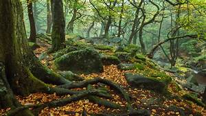 Autumn, In, November, Forest, Trees, Stems, Roots, Rocks, Green, Moss, Fallen, Yellow, And, Red, Leaves