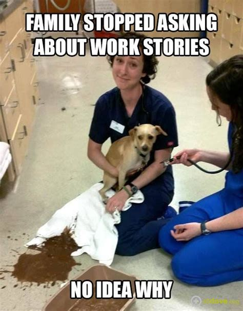 Vet Memes - 1256 best images about veterinary technician on pinterest