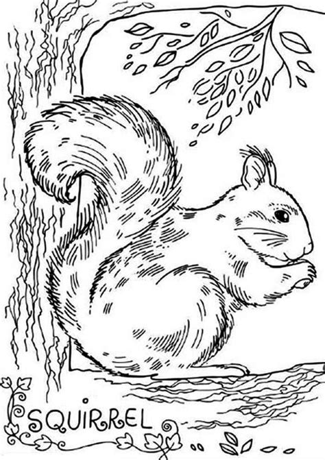 realistic picture  squirrel coloring page