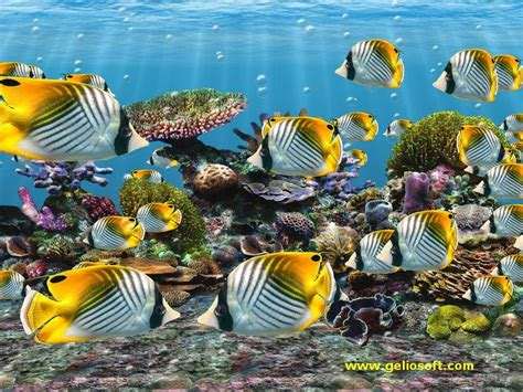 tropical fish fish wallpapers fish pictures fish photos fish wallpapers