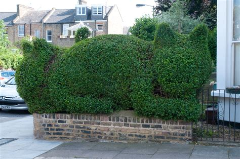 Topiary : Tim's Topiary Or Bushe's Bushes!