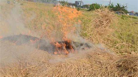 Tips Menyuburkan Kandungan Mengapa Jerami Tidak Boleh Dibakar