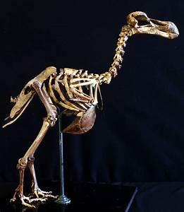 Why the Dodo Deserves a New Reputation   Audubon