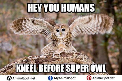 White Owl Meme - owl memes