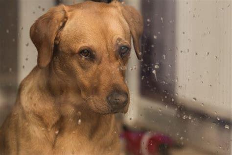 wie beeinflussen der regen und seine geraeusche die hunde