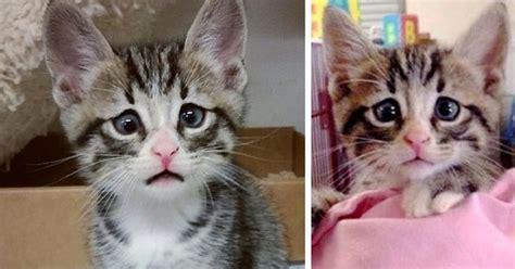 kitten born  permanently worried  eyes bored