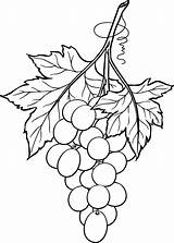 Grapes Bunch Line Drawing Printable Coloring Wine Glass Stained Grape Patterns Outline January Pattern Beccy Place Drawings Fruit Originally Clip sketch template