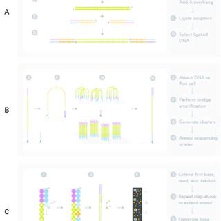 Illumina Sequencing Protocol by Illumina Sequencing Protocol A Fragmentation Of Dna