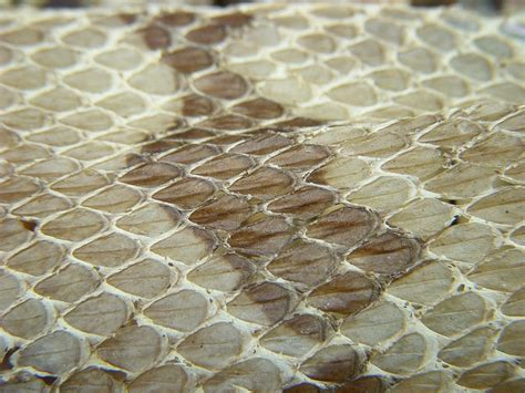 1000 images about texture on pinterest