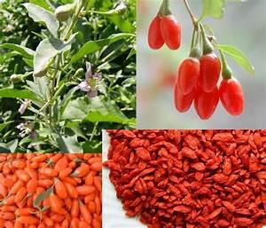 goji berries amino acids