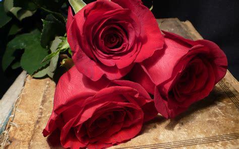 romantic valentine   day rose image wallpaper