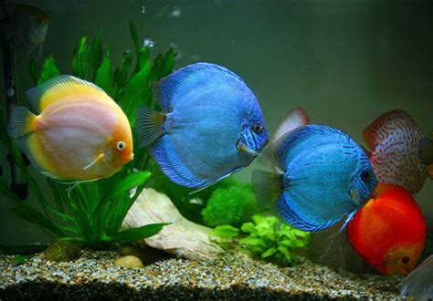sagar fish aquarium    indias biggest fish
