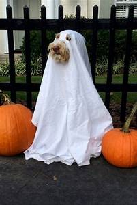 the 10 most popular pet costumes for dogs and cats