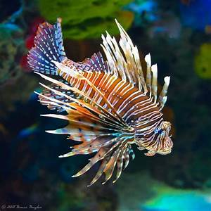 Refreshing, Fascinating And Pretty Fish Photography ...