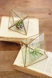 Pflanzen Terrarium Einrichten : set of 2 glass prism terrariums einrichtung terrarium ideen pflanzen dekor und luftpflanzen ~ Watch28wear.com Haus und Dekorationen