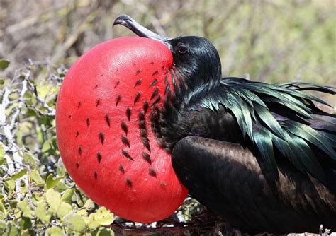 these weird animal courtship displays are probably better