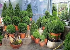 Heimische Pflanzen Für Den Garten : gartengestaltung bilder immergr ner garten balkon und ~ Michelbontemps.com Haus und Dekorationen