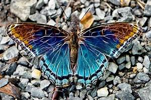Most Beautiful Butterfly Wings | Amazing butterflies ...