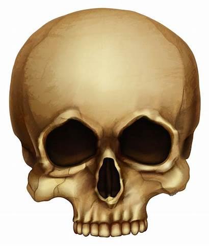 Skull Halloween Clipart Transparent Skulls Clip Skeleton