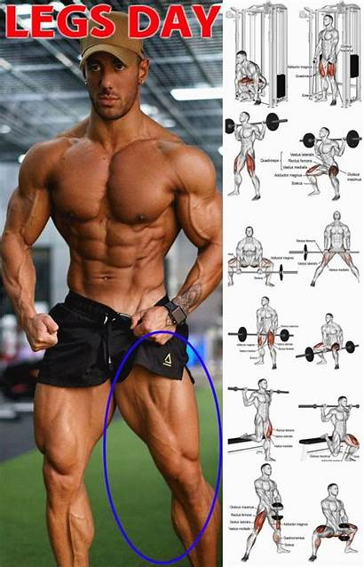 Muscle Leg Workout Legs Workouts Weight Gym
