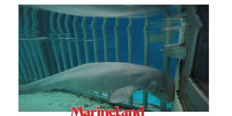 niagara falls ontario marineland shamed as worst aquarium in canada the silothe silo