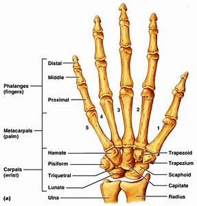 Robot Hand Diagram