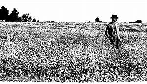 Buckwheat field | ClipArt ETC