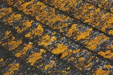 Fungus Among Us Skyline Roofing Taunton Ma Florida High Wind Concrete And Clay Roof Tile Installation Manual Queen Elizabeth Garden Bar Menu London South Kensington Restaurant Rsg Supply Group Gardens Afternoon Tea 2017 Toyota Highlander Rack Cross Bars