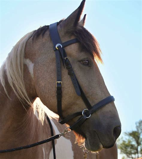 bridle leather headstall bitless draft western dr cook bridles