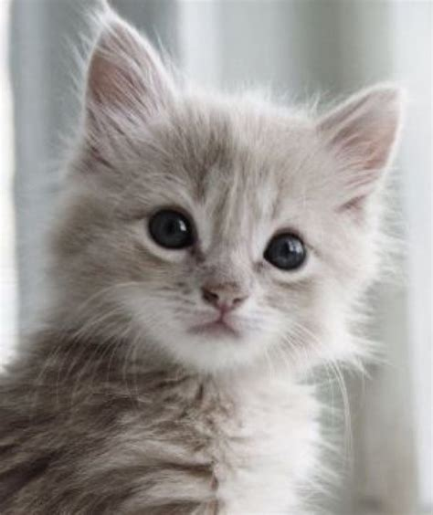 Extremely Cute Kitten  30th March 2015  We Love Cats And
