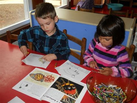 project approach preschool curriculum the project approach in the butterfly project 571