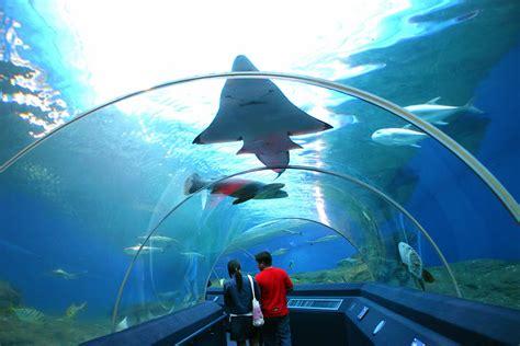 aquarium singapore check out aquarium singapore cntravel