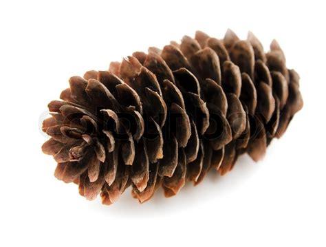 spruce pine cone  white background stock photo colourbox