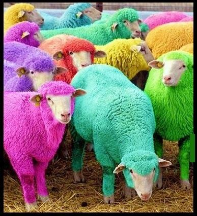 color sheep sheep in sunglasses look here 3