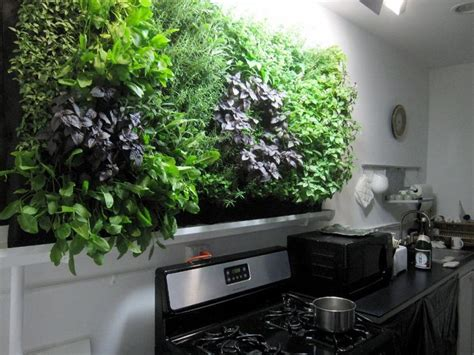 kitchen wall herb garden growing herbs