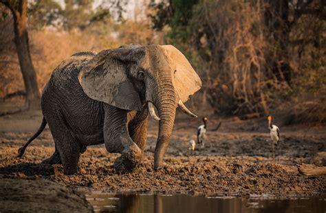 Animal Hd Wallpaper For Pc - fondos de pantalla de elefantes wallpapers hd para