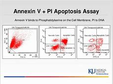 Annexin v pi flow cytometry Images