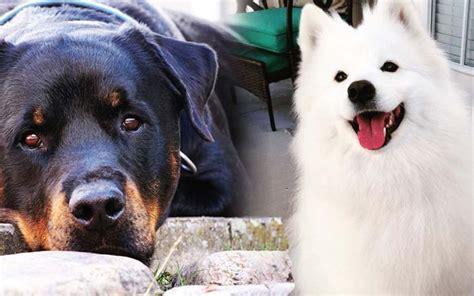 Best Dog Breeds Pictures