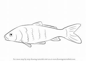 Learn How to Draw a Carp Fish (Fishes) Step by Step ...