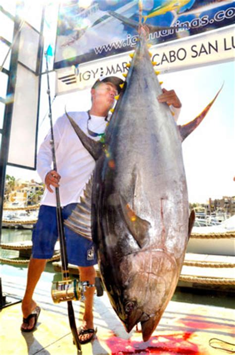 yellowfin tuna record approved