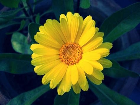 best yellow flowers for your garden amazing pictures
