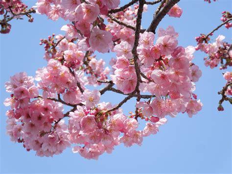 Free Images : landscape branch flower petal food