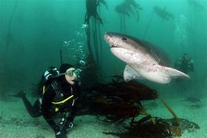 Kelp Forests and Sharks | Expeditions | Michael Scholl