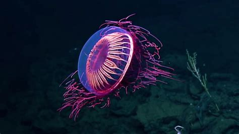 underwater research team encounters  incredible