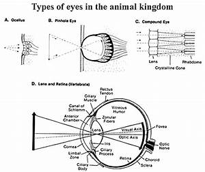 Phy 3400 Image Gallery  Animal Vision