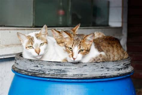 gatti alimentazione gatti anziani alimentazione e prevenzione danni ai reni