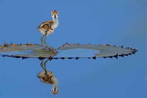 the birds as art 2nd international bird photography
