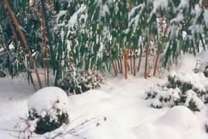 Bambus Im Winter : wintermaerchen ~ Frokenaadalensverden.com Haus und Dekorationen