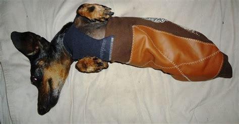 stylish wiener dog drag bag  dog outfit sewing  cut