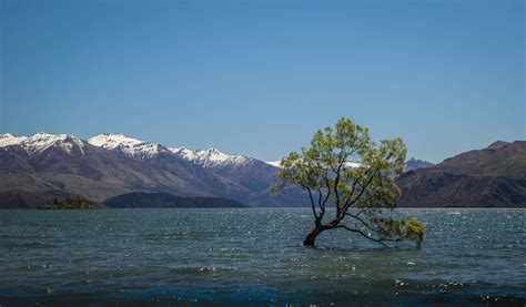 lake mountains  zealand wanaka tree  wallpaper